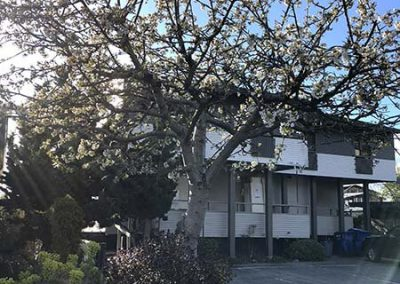 Seattle Sober Living Women - Exterior view with flowering tree